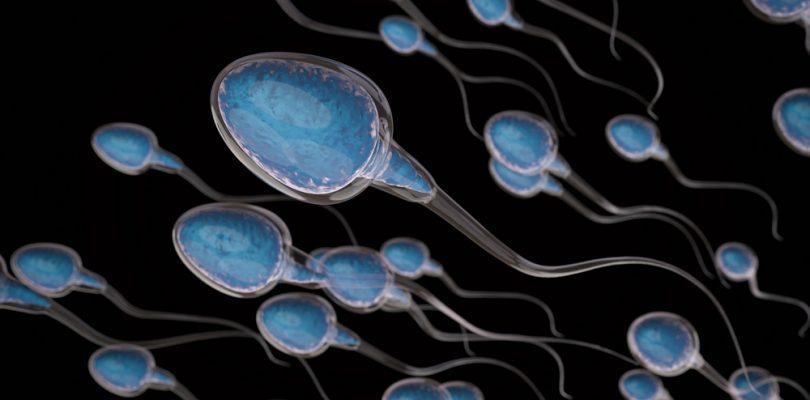sperm count, sperm production