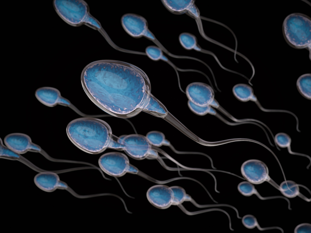 sperm count, sperm production