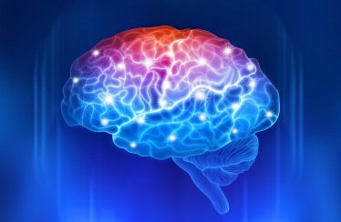 Active parts of human brain. memory boost