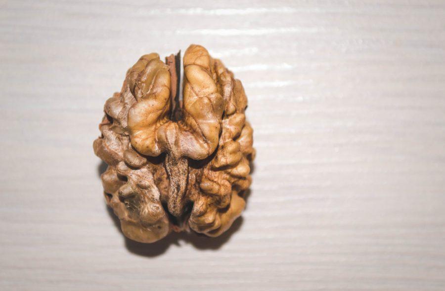 unshelled walnut brain